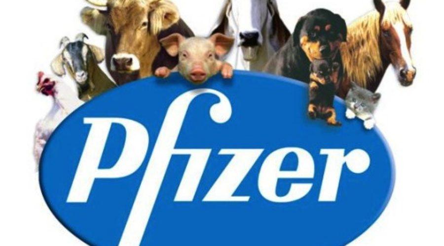 Animal health company, Zoetis, to be spun off Pfizer