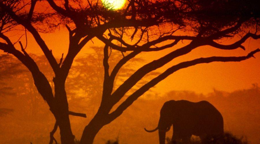 Kenya Tourism Board issues RFP