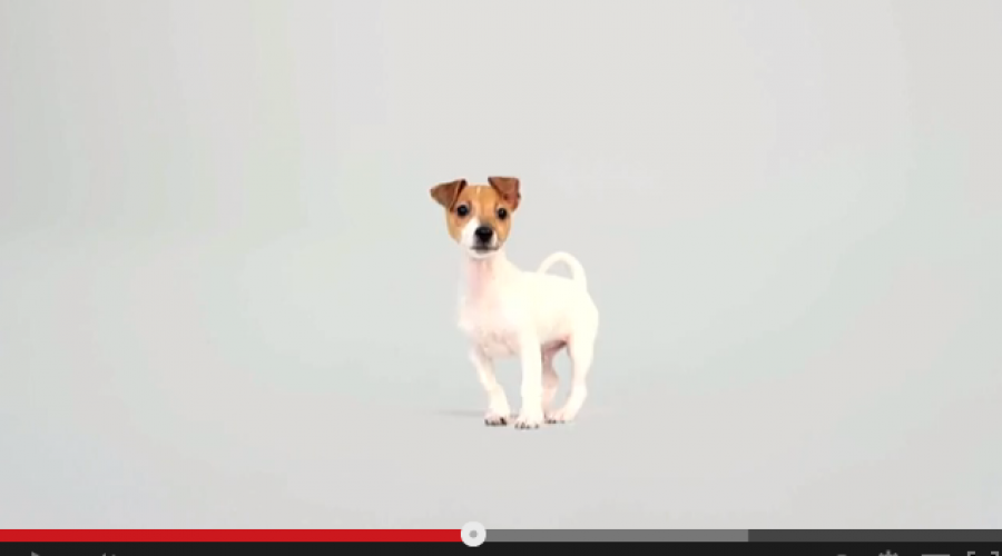 Royal Canin hunts for CMO