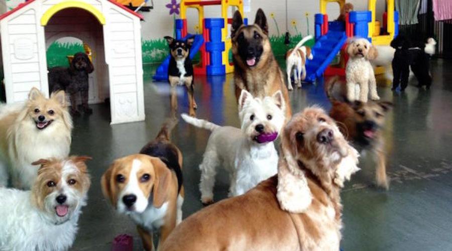 3 Words: American Kennel Club