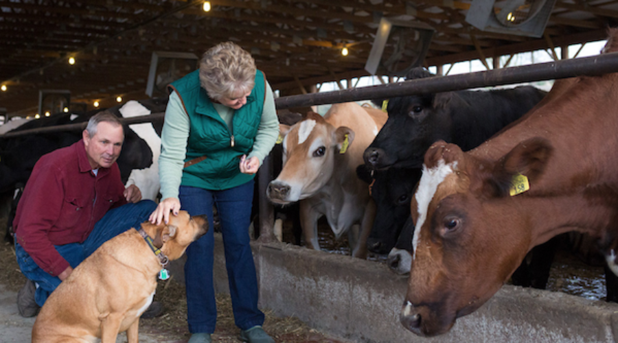 $30 million animal health account you didn't know about