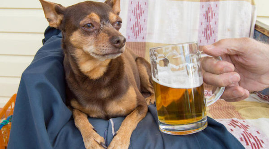 This is a Dog, This is Beer: Any Questions? I bet there are . . .