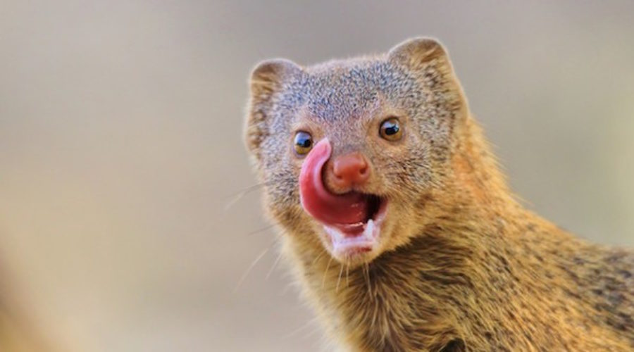 This article has more clues how to pitch this client than a greased tailed mongoose