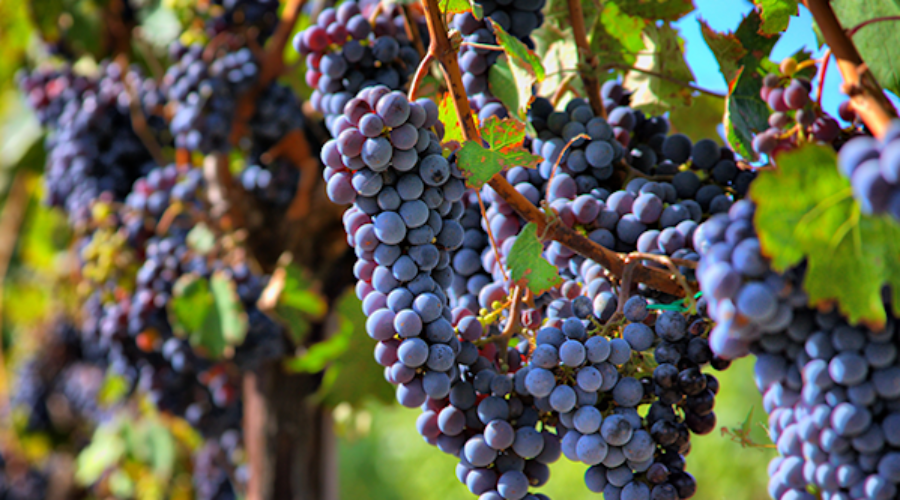 """A """"Green"""" wine brand about to scale growth: Campaign Needed"""