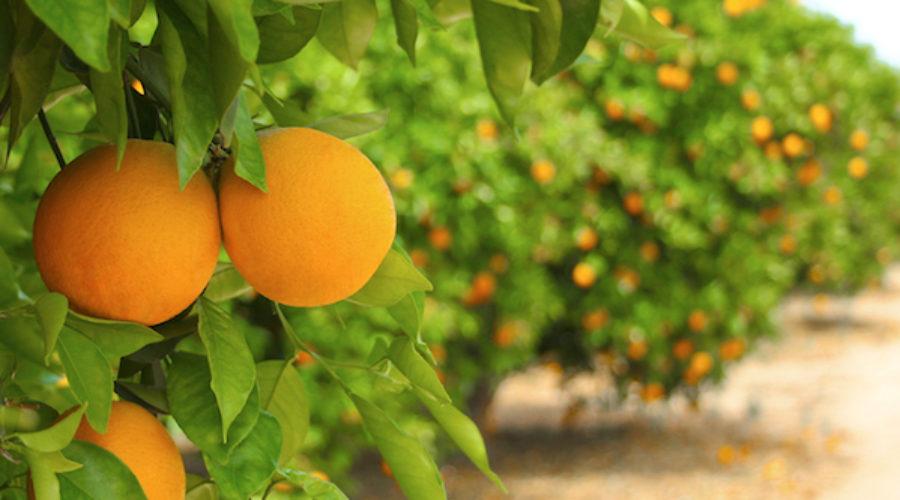 Orange County Workforce Outreach Program