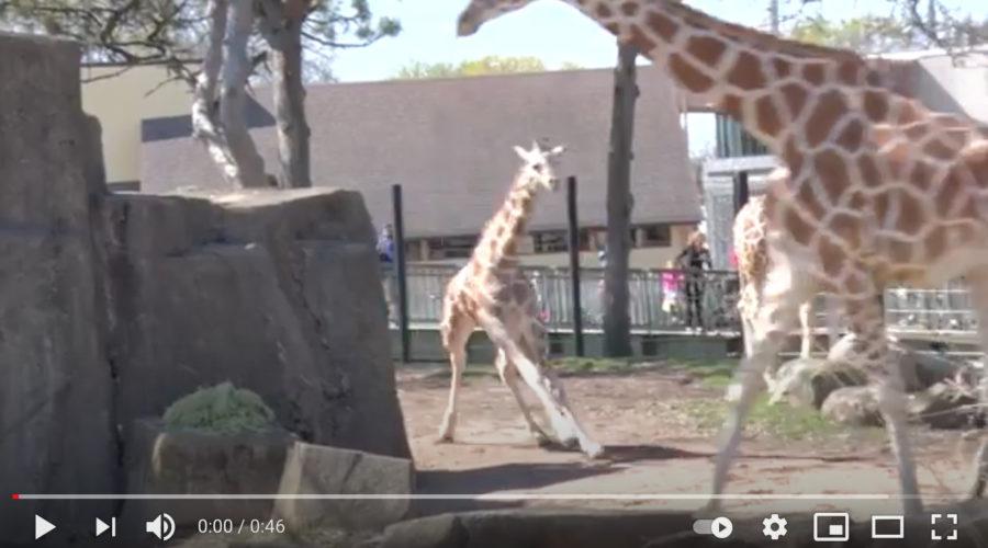 Midwestern Zoo Adverting RFP