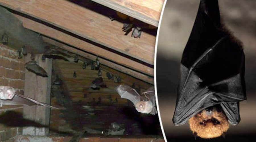 Friday's special: Church of England seeks PR expert to promote harmony between bats & worshippers