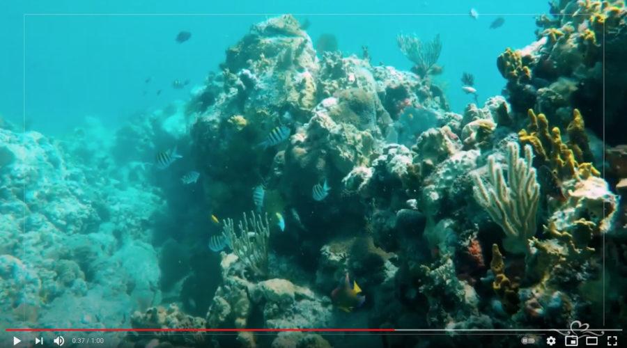 Caribbean Island Tourism RFP