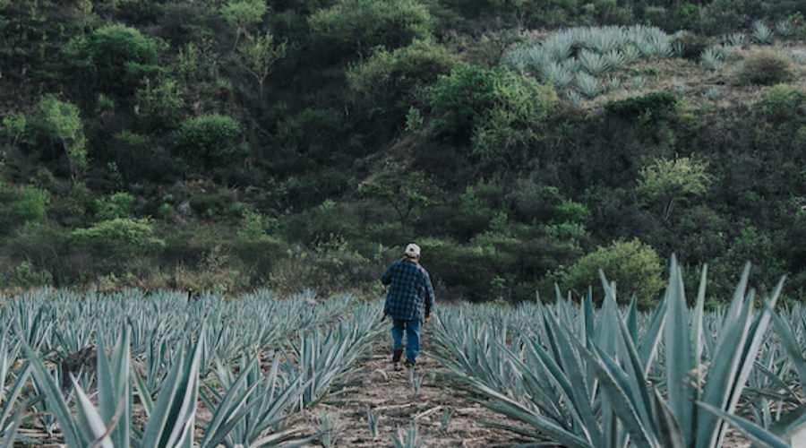 Mezcal brand gets deep pockets for expansion: New campaign expected