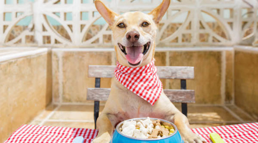 Dog Food to Junk Food: Could Work